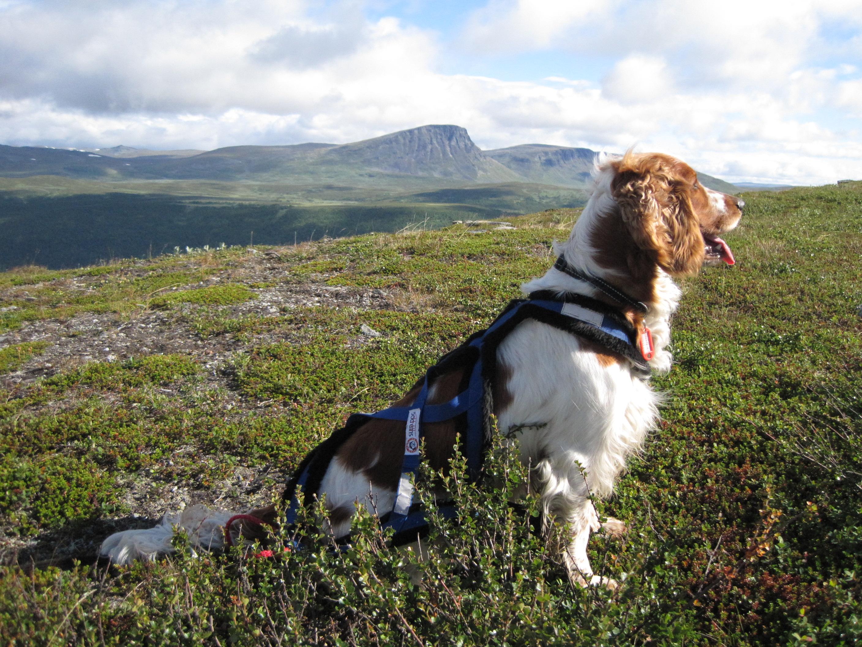 Fjällvandra med hund | wiviken.se