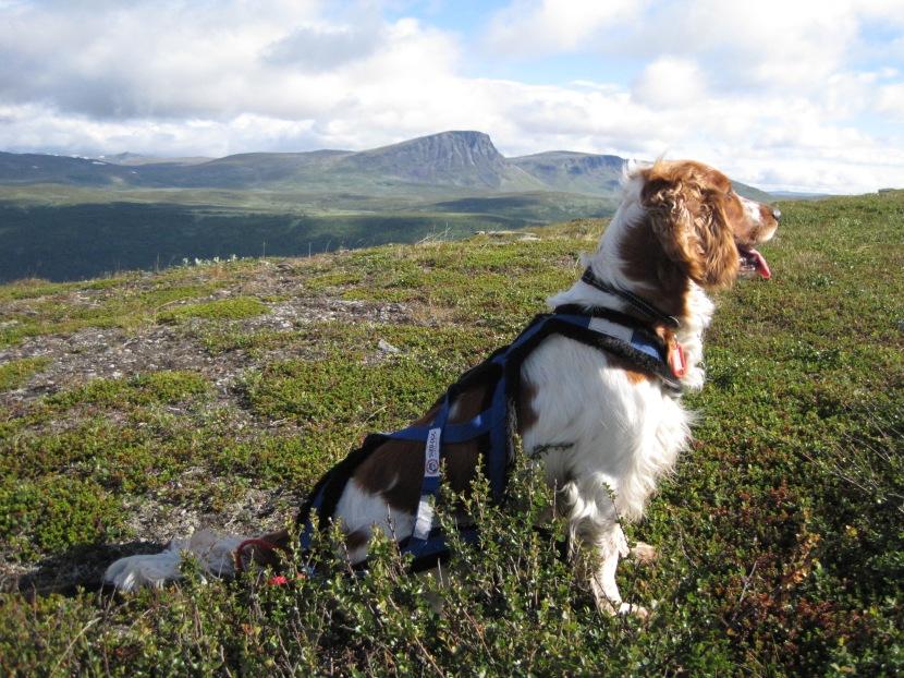 Om att fjällvandra med hund –packlista