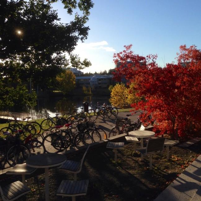 Umeå Universitet campus höst