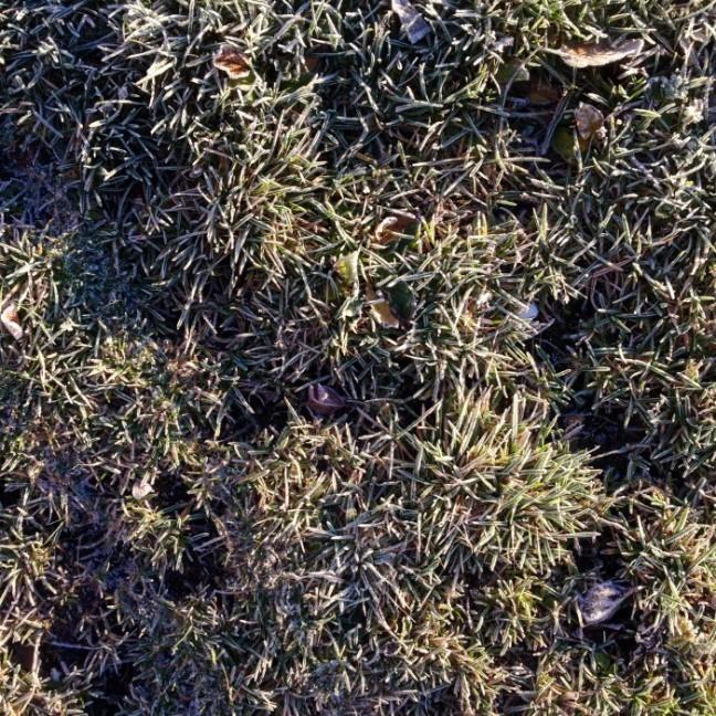 frost umeå campus