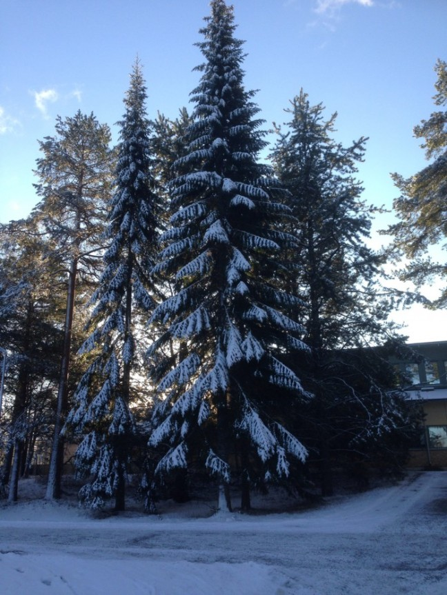 gran snö