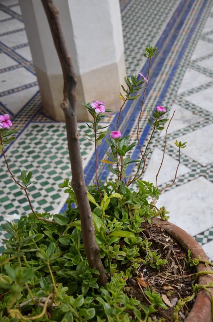 krukväxt mosaikgolv