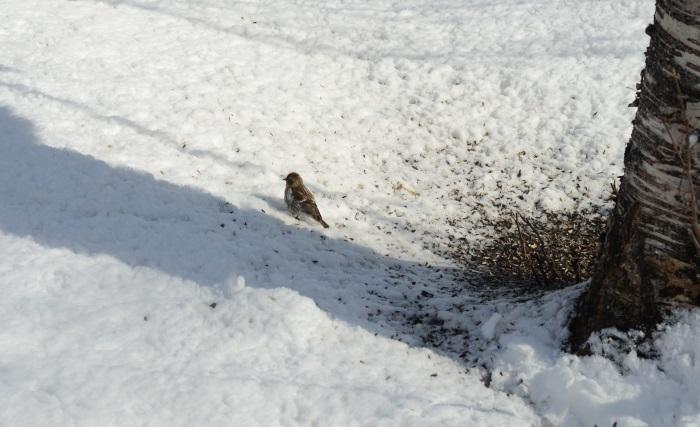 småfågel mark