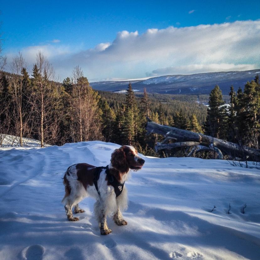 Vinterns bästa löprunda – skoterspår tillÖrnbo