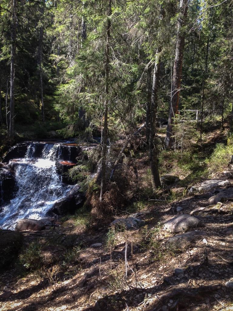 Trailrunning skuleskogen höga kusten (10)