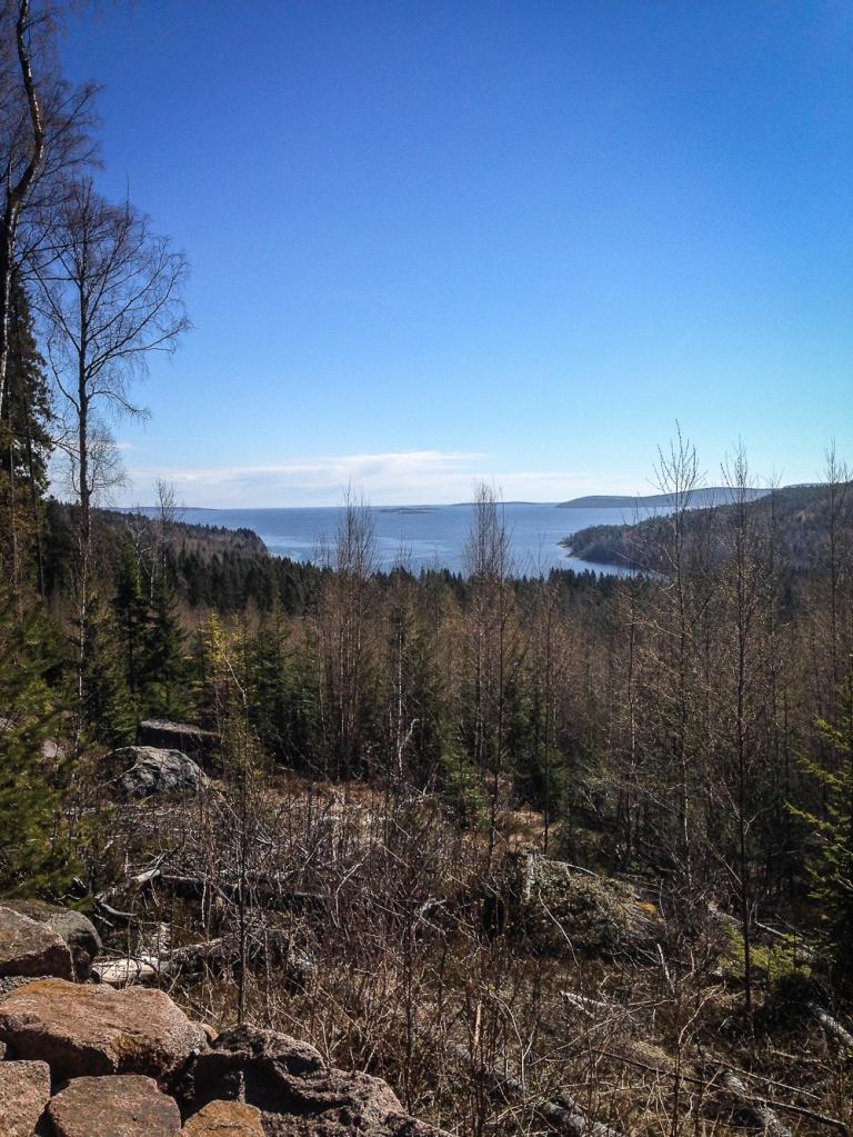 Trailrunning skuleskogen höga kusten (4)