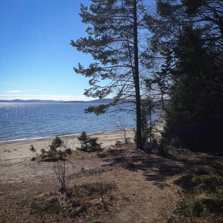 Trailrunning skuleskogen höga kusten (6)