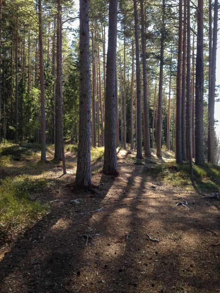 Trailrunning skuleskogen höga kusten (8)