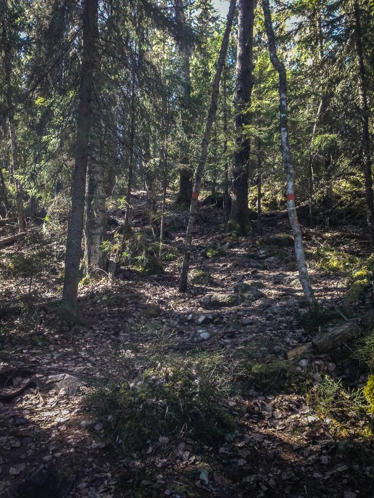 Trailrunning skuleskogen höga kusten (9)